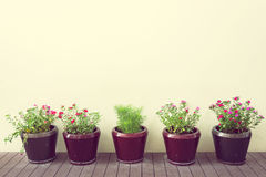 Flowers in flowerpots on wood floor with blank wall, vintage sty Royalty Free Stock Photo