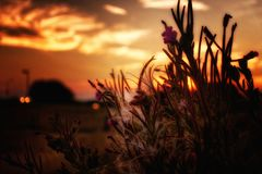 Flowers, Fluff And Sundown stock image