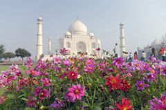 Flowers in focus on the background of OUT OF FOCUS Taj mahal at Agra. Royalty Free Stock Images