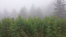 Flowers in Fog. Fog in the Smokey Mountains with wild flowers Royalty Free Stock Photo