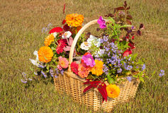 Flowers and foliage in brilliant fall colors Royalty Free Stock Photo