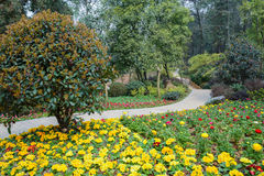 Flowers and footway on hillside in spring Royalty Free Stock Photo