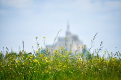 Flowers in the foreground with defocused silhouette of Mont Saint Michel, France. Copy space for text. stock photo
