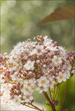 Flowers in the foreground with green background Royalty Free Stock Photography