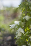 Flowers in the foreground with green background Royalty Free Stock Photo