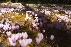 Flowers in the forest. Blooming carpet Stock Photography