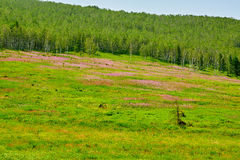 The flowers and forest on the hillside Stock Photos