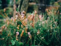 Flowers in the forest with unfocused background stock photo