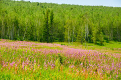 The flowers and forests Stock Images