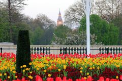 Buckingham palace in london. Flowers in fornt of buckingham palace with big ben Royalty Free Stock Photo