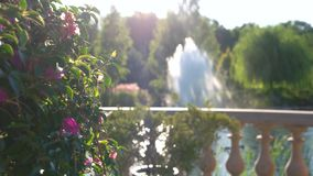 Flowers on fountain background. Plant on the balcony. Basics of botany stock video footage