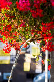 Flowers and fountain Royalty Free Stock Images