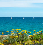Flowers with four sailboats. Blue sea water and sky Royalty Free Stock Photos