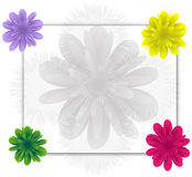 Flowers frame. Frame with a few flowers Stock Photo