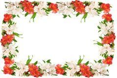 Flowers frame. Royalty Free Stock Images