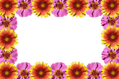 Flowers frame. Isolated on a white background Royalty Free Stock Images