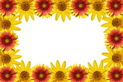 Flowers frame. Isolated on a white background Royalty Free Stock Photo