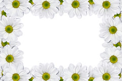 Flowers frame Royalty Free Stock Photos