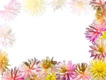 Flowers frame Stock Photo