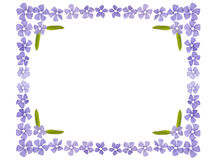 Flowers frame Stock Image