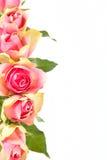 Flowers frame isolated on white Stock Image