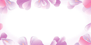 Flowers frame. Pink petals  on white. Vector Royalty Free Stock Images
