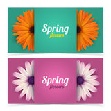 Flowers and frame for text. Royalty Free Stock Image