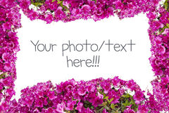 Flowers Frame. On white background stock images