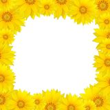 Flowers frame with yellow sunflower Royalty Free Stock Images