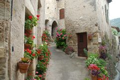 Flowers in France (St Guilhem). Typical French village in the Mountains Royalty Free Stock Image