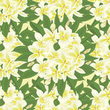 Flowers frangipani seamles background with leafs in realistic hand-drawn style Royalty Free Stock Image