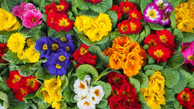 Flowers. Fresh colourful flowers in Japan Royalty Free Stock Images