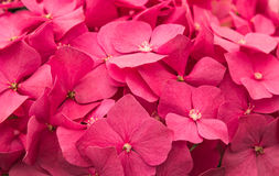 Flowers. Royalty Free Stock Image