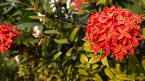 Flowers fresh green glow in the evening. Royalty Free Stock Images