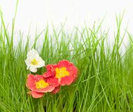 Flowers on fresh green grass Stock Images