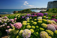 Flowers From Biarritz Royalty Free Stock Images