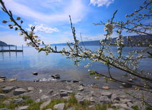 Flowers in front of the Bodensee Stock Photo