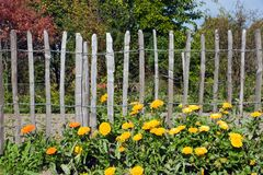 Flowers in front of a fence Stock Photos