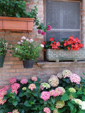 Flowers in front of house wall Royalty Free Stock Photography