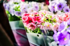 Flowers In Front Of A Local Florist - Turkey Royalty Free Stock Images