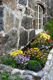 Flowers in front of a pub. Multicolor flowers in front of a pub in the lofoten islands (norway Stock Photography