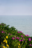 Flowers in front of sea Royalty Free Stock Images