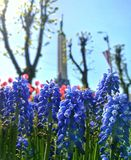 Blue / violett flowers stock photos