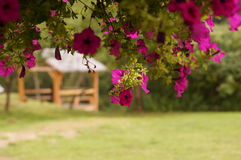 Flowers in front of wood arbor. In green fields Stock Photography
