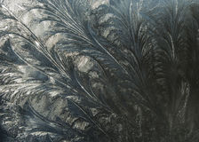 Flowers of Frost. Patterns of frozen water on the glass surface Royalty Free Stock Photography