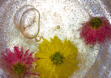 Flowers are frozen in the ice. Beautiful bright colors. Background. Stock Photos