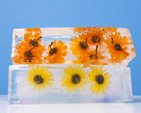 Flowers Frozen in Ice Block Royalty Free Stock Photo