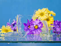 Flowers Frozen in Ice Stock Photography