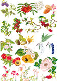 Flowers and fruits collection on white Stock Images