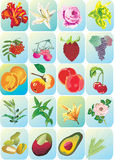 Flowers and fruits icons Stock Photos